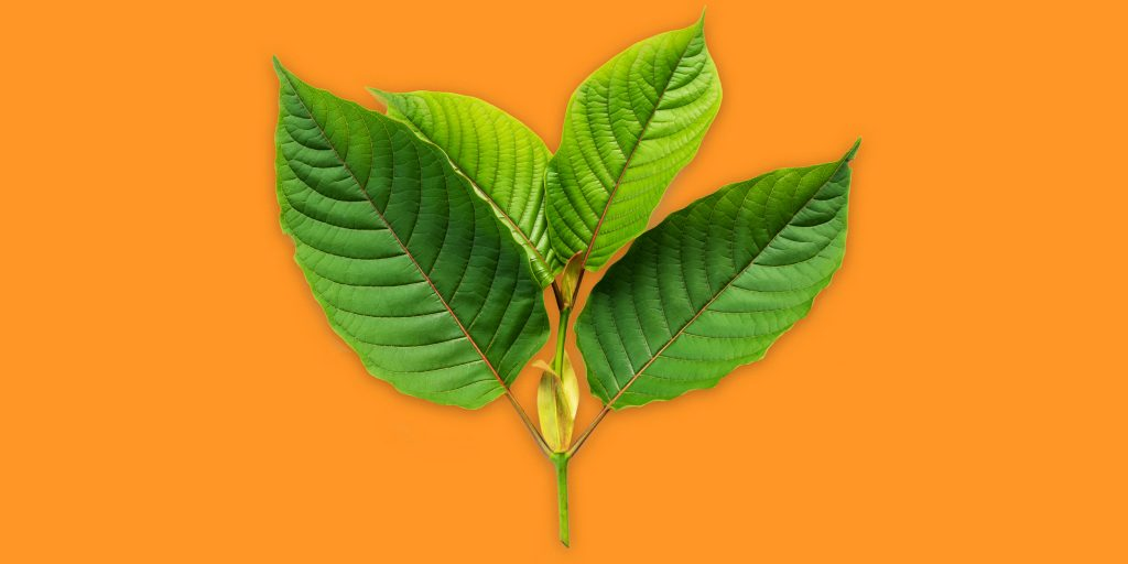 What Makes Purchase Kratom This Distinct